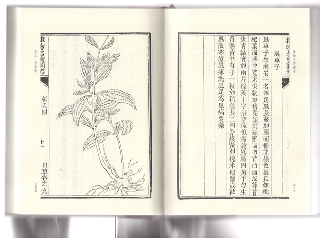 A scanned spread from <em>Zhi Wu Ming Shi Tu Kao,</em> ed. Wu Qijun (Qing Dynasty), (Zhejiang: Zhejiang People's Fine Arts Publishing House, 2014).