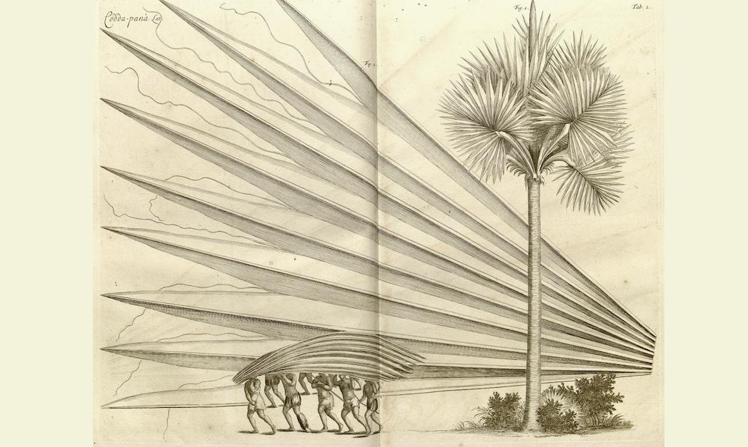 pyramids and palm trees test pdf