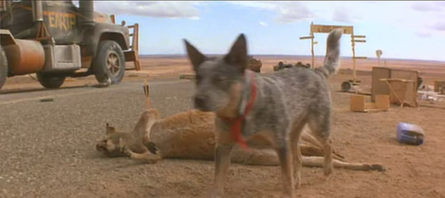Mad Max's dog wanders in an abandoned site in <em>Mad Max II: The Road Warrior</em> (1981).
